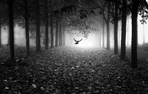 Picture leaves, light, fog, Park, bird, light, alley, bird, park, leaves, fog, alley, Marc Huybrighs