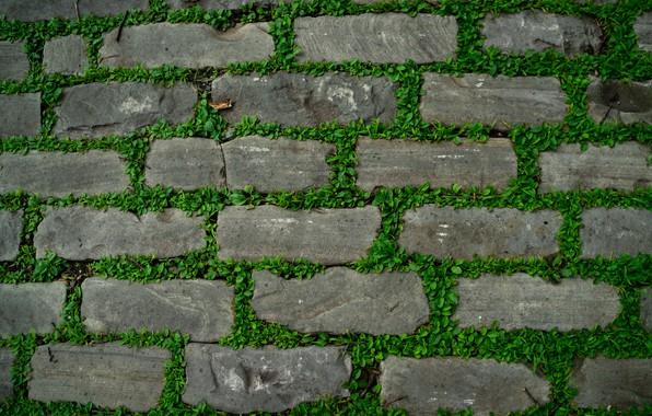 Picture grass, stones, track
