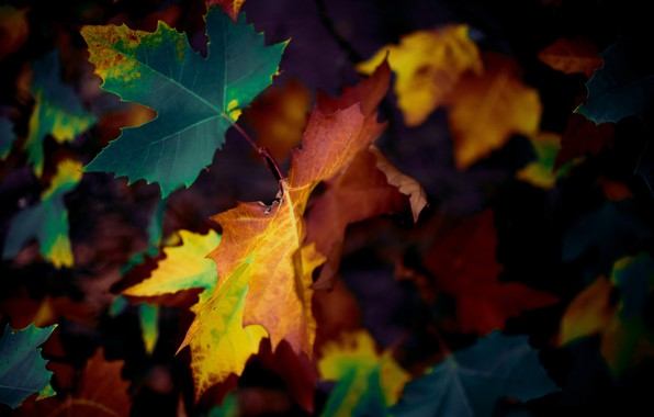 Picture autumn, leaves, nature