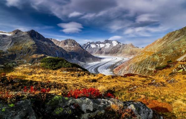 Picture flowers, mountains, Switzerland, glacier, Alps, Switzerland, Alps, Aletsch glacier, Aletsch Glacier