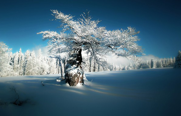 Picture winter, the sky, snow, nature, silence, frost, Sunny day, tree in the snow, trees in …