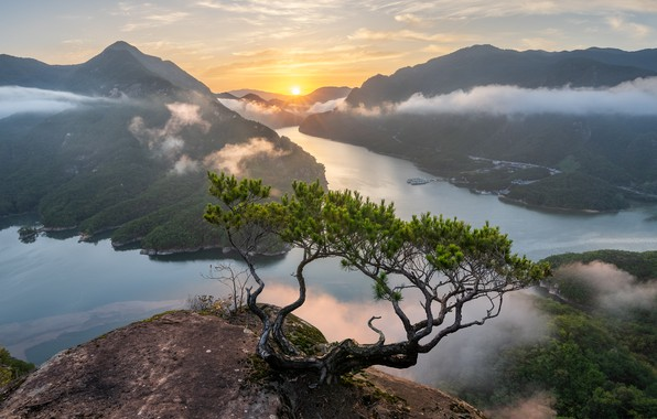 Picture the sun, clouds, rays, landscape, mountains, nature, fog, tree, dawn, morning, pine, South Korea, Jaeyoun …