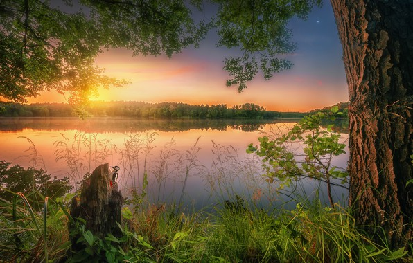 Picture summer, grass, sunset, lake, reflection, tree
