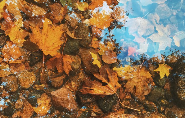 Picture autumn, leaves, water, nature, lake, stones, background, beauty, maple, mirror