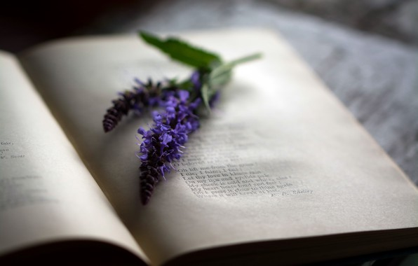 Picture flower, macro, book