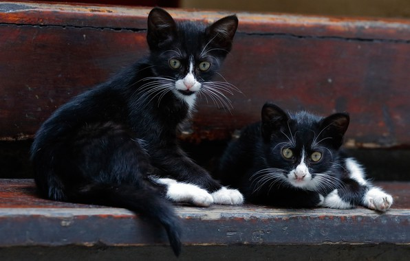 Picture kittens, a couple, twins