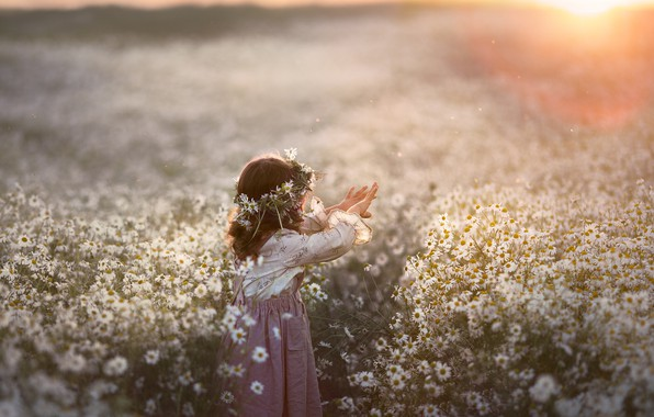 Picture field, summer, sunset, flowers, nature, chamomile, girl, wreath, baby, child, Kudrova Tatiana
