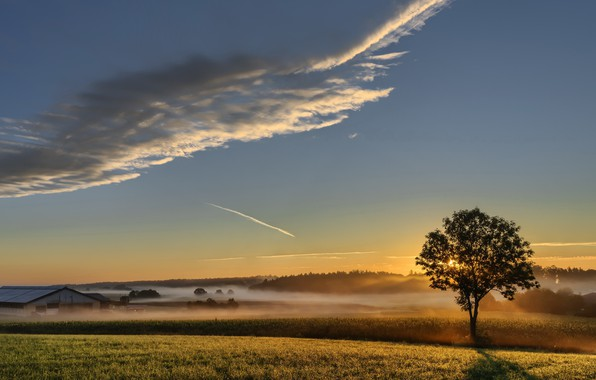 Picture field, sunset, fog, tree