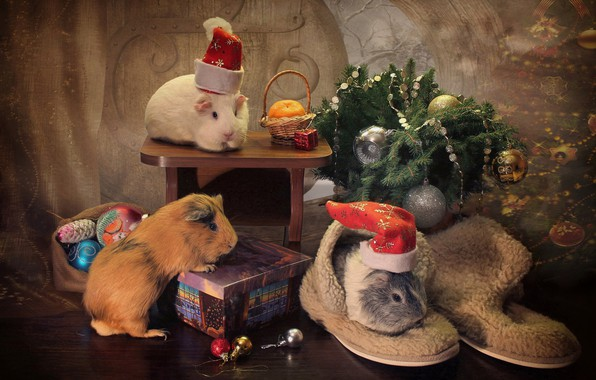 Picture balls, decoration, gift, balls, toys, New year, rodents, Guinea pigs, Trinity, spruce branches, caps
