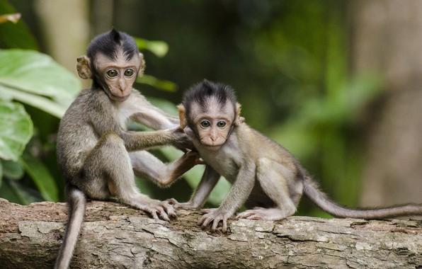 Picture photo, tree, monkeys