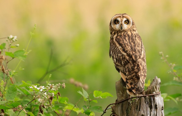 Picture look, branches, nature, green, background, owl, bird, stump