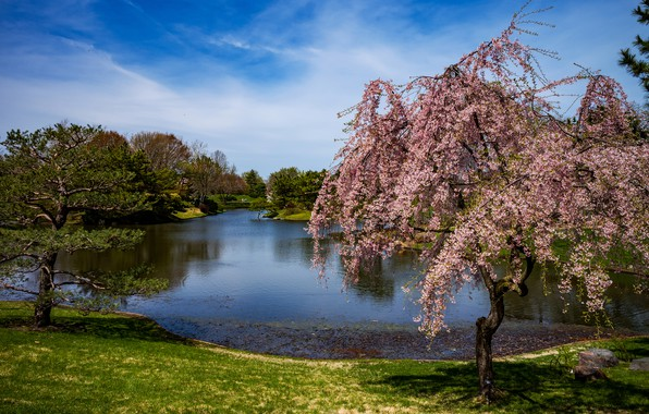 Picture the sky, grass, the sun, clouds, trees, pond, Park, USA, flowering, Missouri Botanical Garden