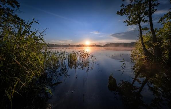 Picture trees, lake, sunrise, dawn, morning, reed, Russia, Shaturskaya lake