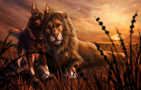 Picture animals, grass, sunset, dog, Leo, friendship