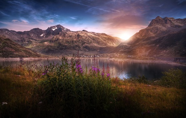 Picture flowers, mountains, nature, lake