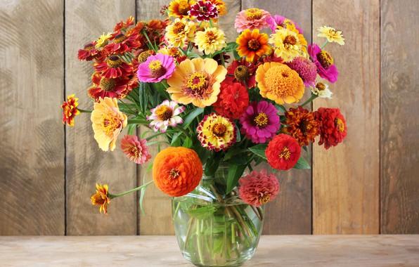 Picture autumn, flowers, bouquet, colorful, still life, flowers, autumn, still life, bouquet