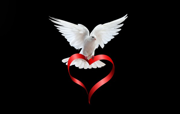 Picture white, bird, heart, dove, wings, feathers, tape, black background, red, Valentine's day