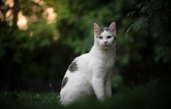 Picture greens, cat, look, portrait, bokeh, cat