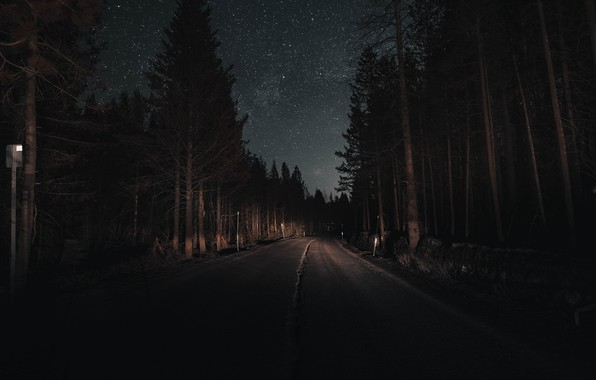 Picture road, forest, the sky, light, trees, night, stars, pine, headlights