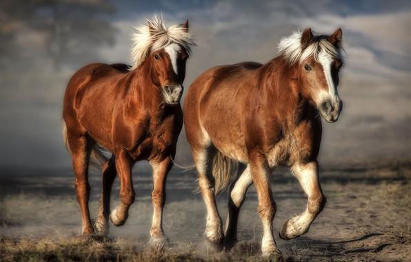Picture background, horse, computer design