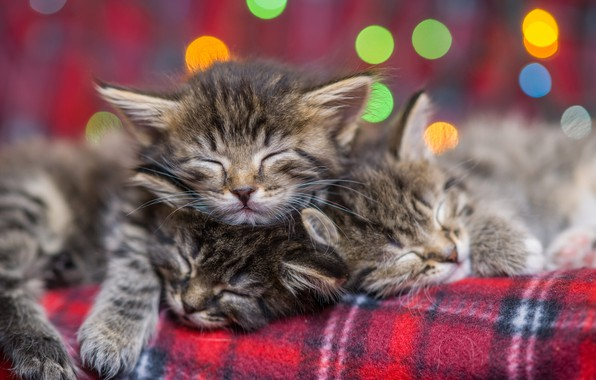 Picture small, kittens, sleep, bokeh, Eygenei Eg