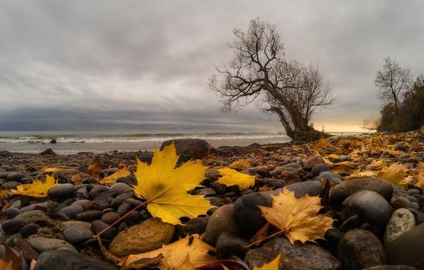 Picture sea, leaves, shore