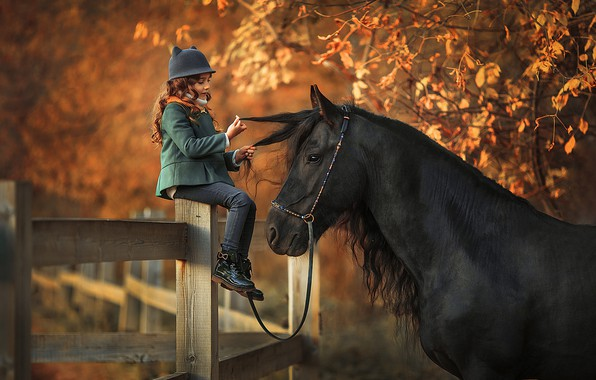 Picture autumn, look, leaves, light, branches, nature, pose, background, tree, mood, horse, foliage, black, horse, Board, …