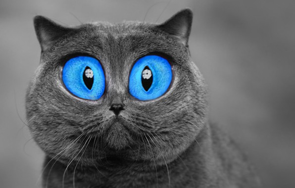 Picture cat, eyes, photoshop, grey