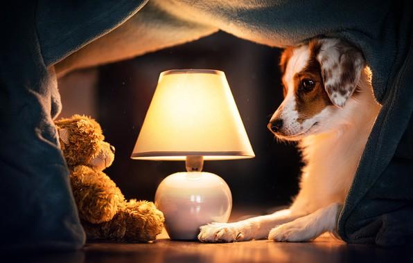 Picture lamp, dog, bear, plaid, Teddy bear