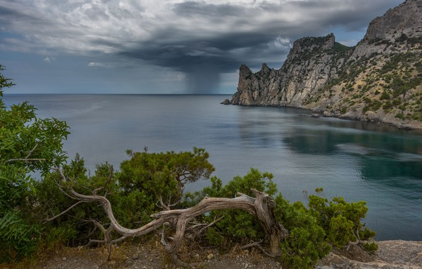 Picture sea, landscape, clouds, nature, rain, tree, rocks, Bay, Crimea, pine, New Light, Vladimir Ryabkov