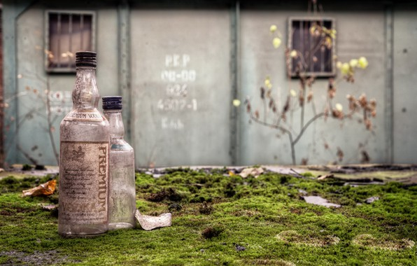 Picture background, moss, bottle