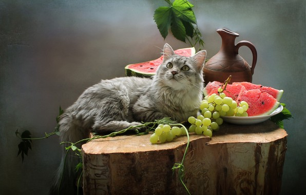 Picture cat, cat, berries, animal, stump, watermelon, grapes, pitcher, fruit, still life, Kovaleva Svetlana