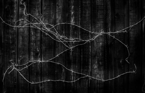Picture Board, black, Barbed wire