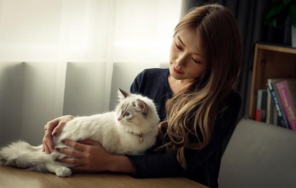 Picture cat, girl, comfort