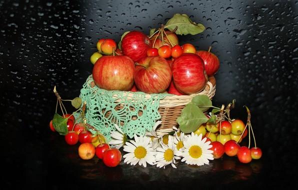 Picture nature, mood, apples, chamomile, beauty, basket, beautiful, beautiful, kitaika, beauty, harmony, the Wallpapers, wildflowers, cool, ...