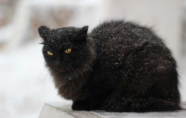 Picture cat, snow, background