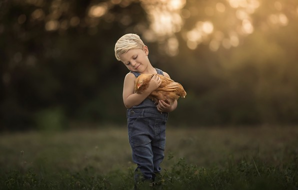Picture nature, chicken, boy