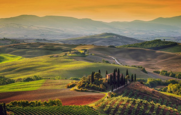 Picture trees, field, Italy, Tuscany