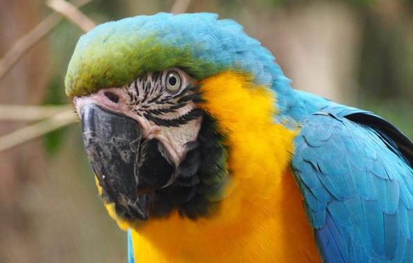 Picture Bird, Ara, Parrot, Pen, Colorful, Exotic