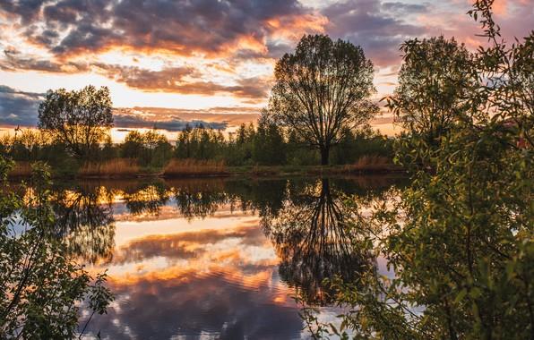 Picture trees, landscape, sunset, nature, pond, reflection, Vladimir Vasiliev