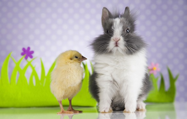Picture fluffy, rabbit, chicken
