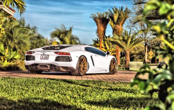 Picture Lamborghini, Aventador, Lamborghini Aventador, Lamborghini Aventador