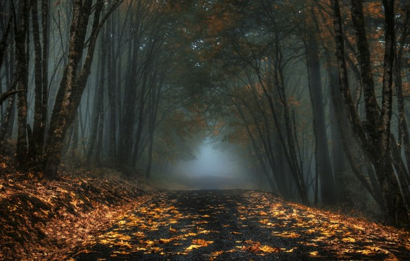 Picture road, autumn, forest, fog, overcast