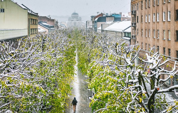 Picture Lithuania, Kaunas, Freedom alley, the spring