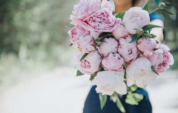 Picture flowers, peonies, Anita Austvika