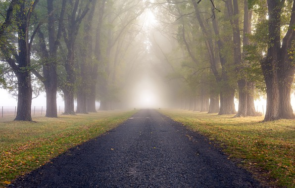 Picture road, nature, fog