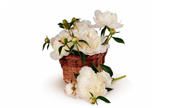 Picture background, basket, peonies