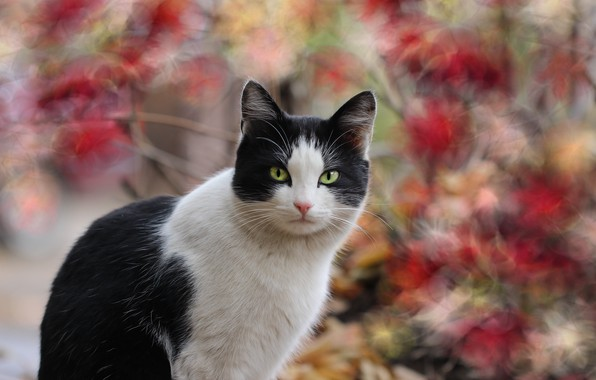 Picture autumn, cat, background
