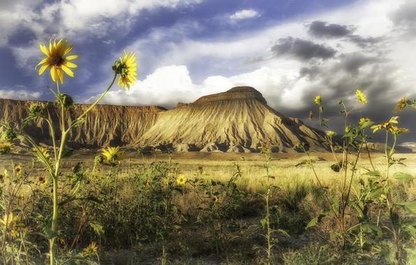 Picture sunflowers, landscape, flowers, nature, mountain, beauty
