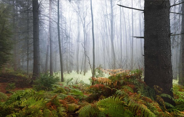 Picture forest, Germany, Magic forest